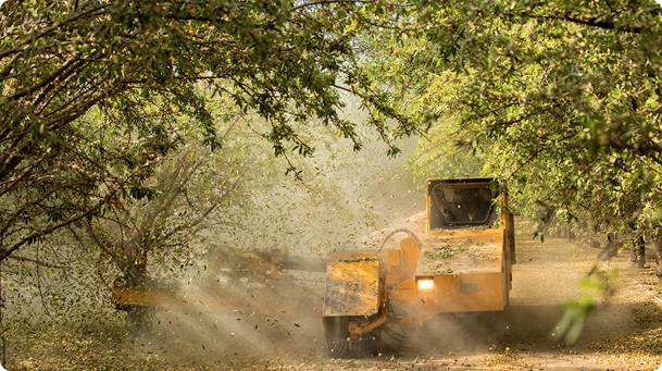 Agriculture machine cutting orchard trees