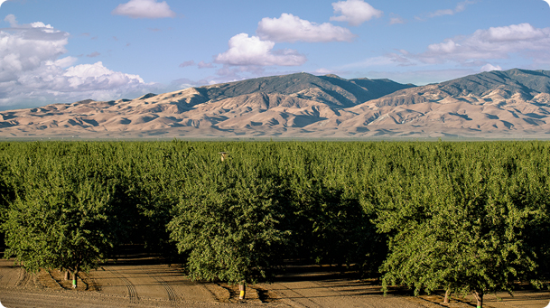 California Orchard