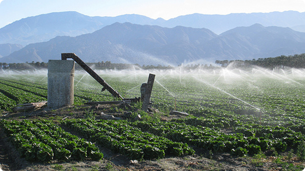 Plants in field getting watered