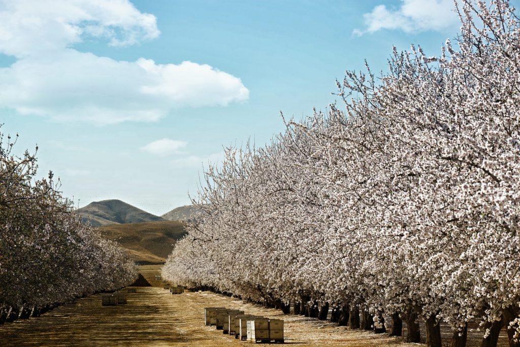 image of crop