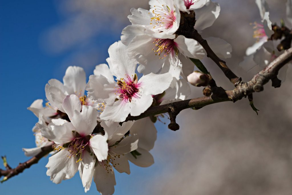 picture of blossom flowers
