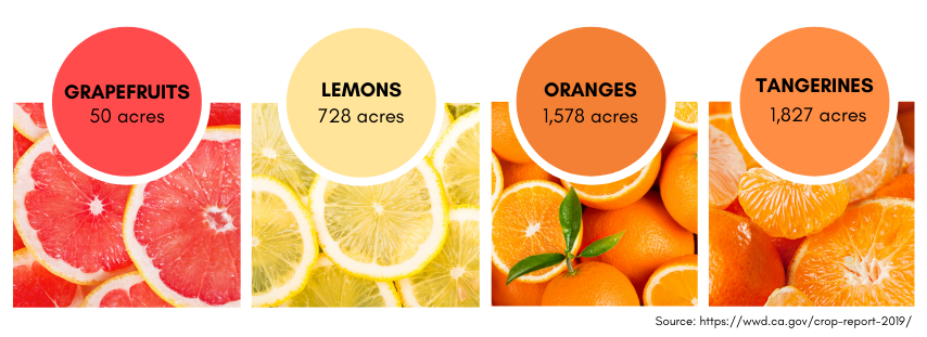picture of fruits showing Grapefruits 50 acres, Lemons 728 acres, Oranges 1,578 acres and Tangerines 1,827 acres